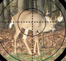 Ciervo en el campo a través del visor de una escopeta