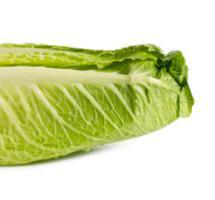 Una lechuga fresca y verde
