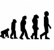 Ilustración de la cadena evolutiva desde el mono al hombre