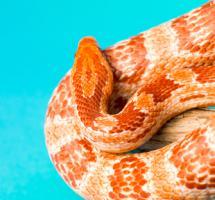 Serpiente enrollada