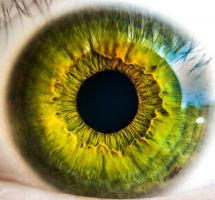 ¿Dar dinero para investigación sobre retina?