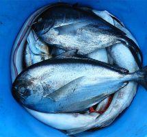 Evitar el consumo de pescados grandes durante el embarazo