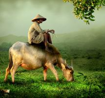 Consumir verduras de agricultura ecológica