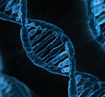 Pensar que mi capacidad de aprender está determinada por mi genética