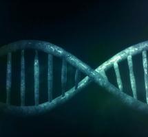 Pensar que mi capacidad intelectual está determinada por mi genética