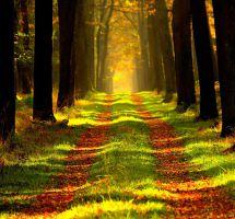 ¿Practicar ecoturismo para sensibilizar sobre el medio ambiente?