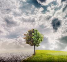 Promover acuerdos internacionales para frenar el cambio climático