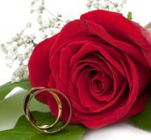 Anillos de compromiso con rosas de fondo