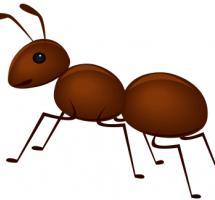 hormiga marron