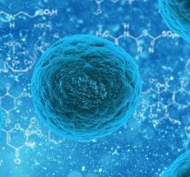 Utilizar células madre para regenerar tejido cardíaco
