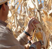 productores locales, campesinos