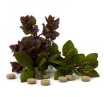 Planta y pastillas de valeriana sobre fondo blanco