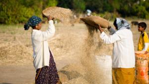 Varias mujeres de raza negra trabajan con el trigo